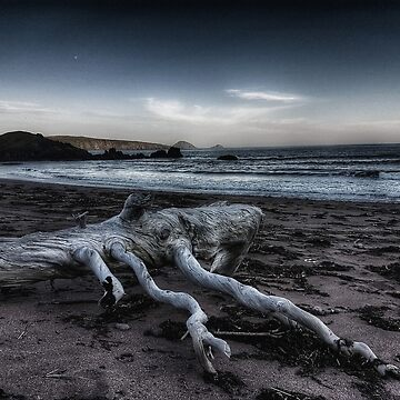Driftwood by rpiercey