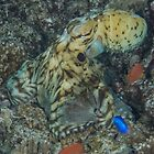 Day Octopus by Mark Rosenstein