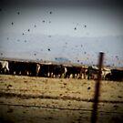 We Got Cows by bchrisdesigns