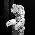 THE BELVEDERE TORSO by Thomas Barker-Detwiler