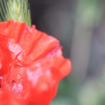 Flowers 3 by RikaKatsu