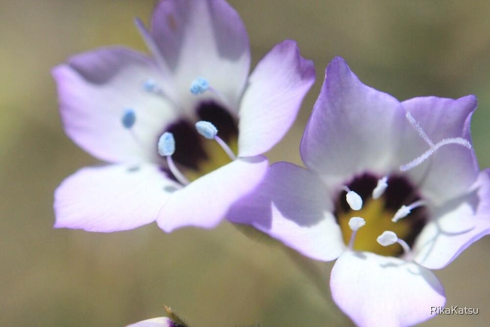 Flowers 2 by RikaKatsu
