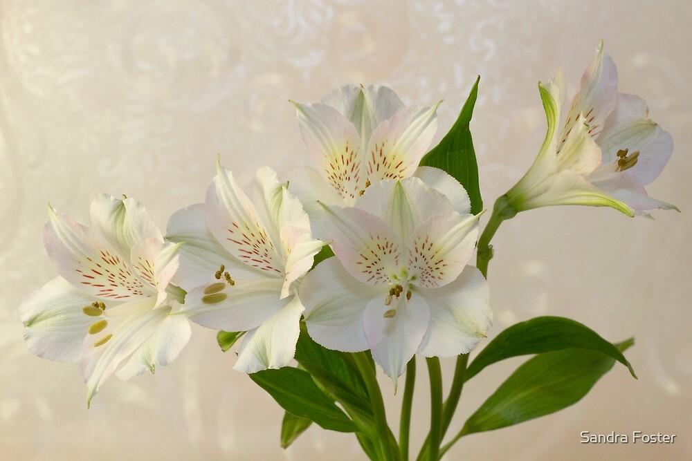 White Alstromeria Lily Flowers  by Sandra Foster
