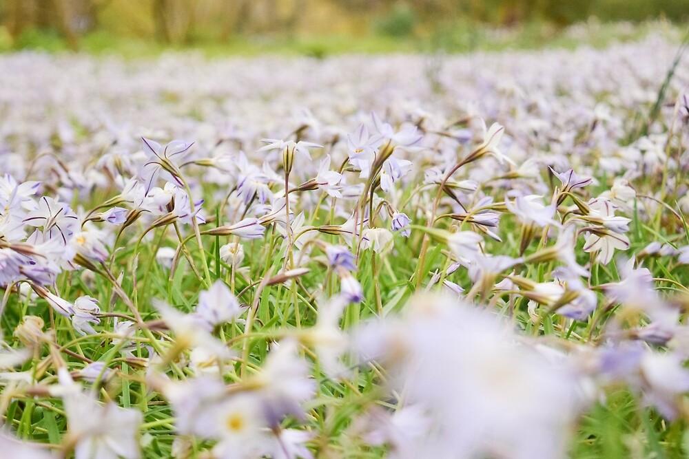 Spring Awakening by minnabanawan