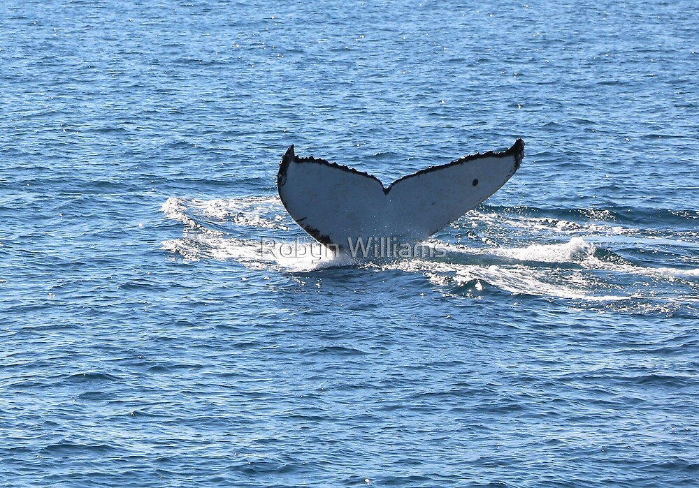 Humpback Whale Sighting by Robyn Williams