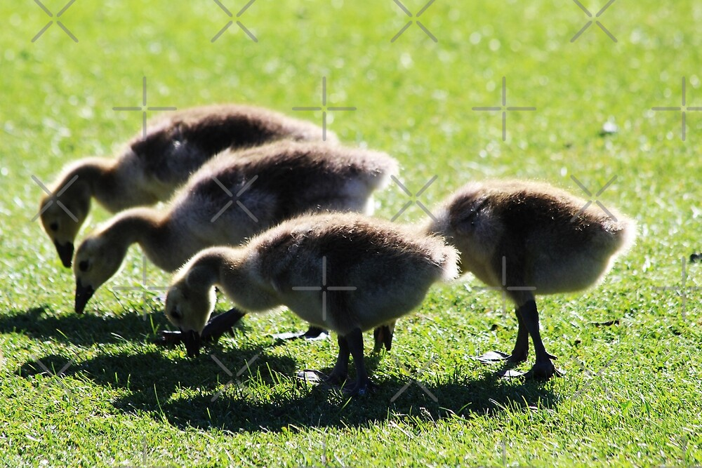 Four Chicks by Alyce Taylor