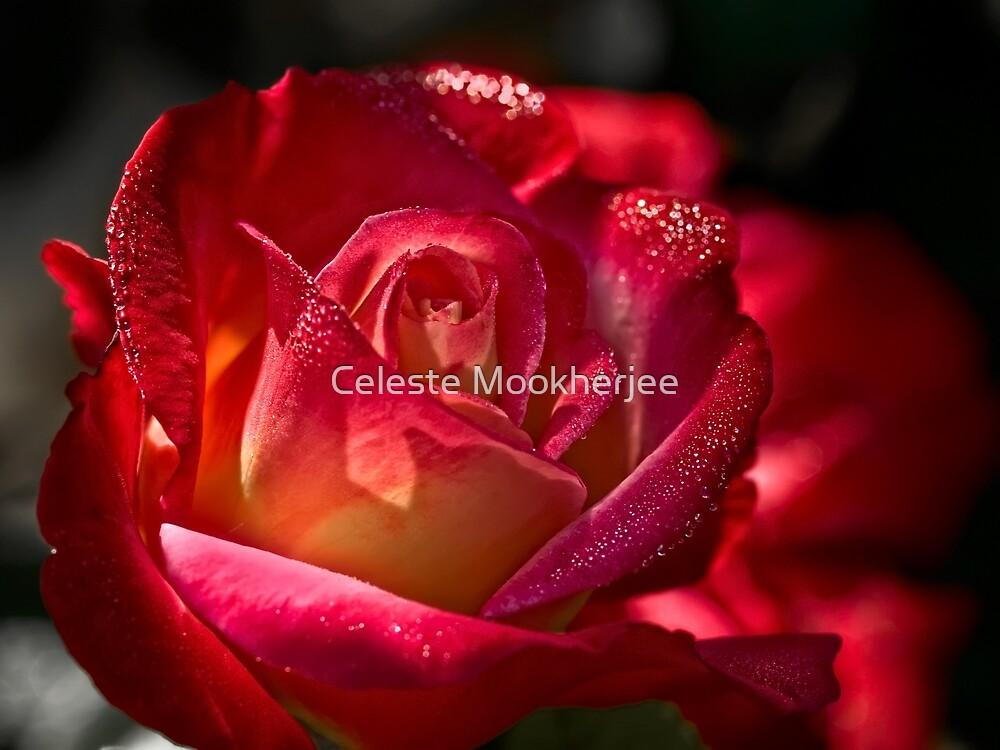 Rose funkelt mit Morgentau von Celeste Mookherjee