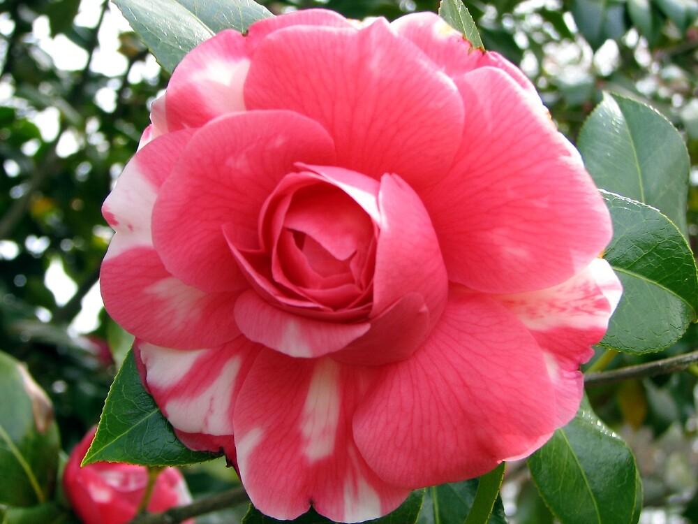 Tree of beautiful Flowers by spiritsfreedom