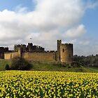 Alnwick Castle in Spring by wiggyofipswich