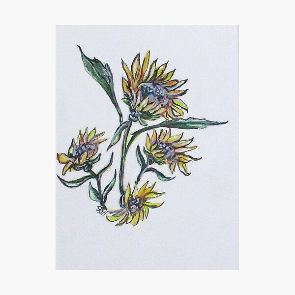 Sunflower Crazy Photographic Print