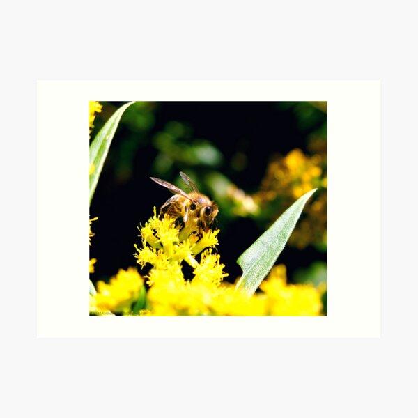 ~Pollinator~ Art Print