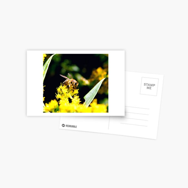~Pollinator~ Postcard