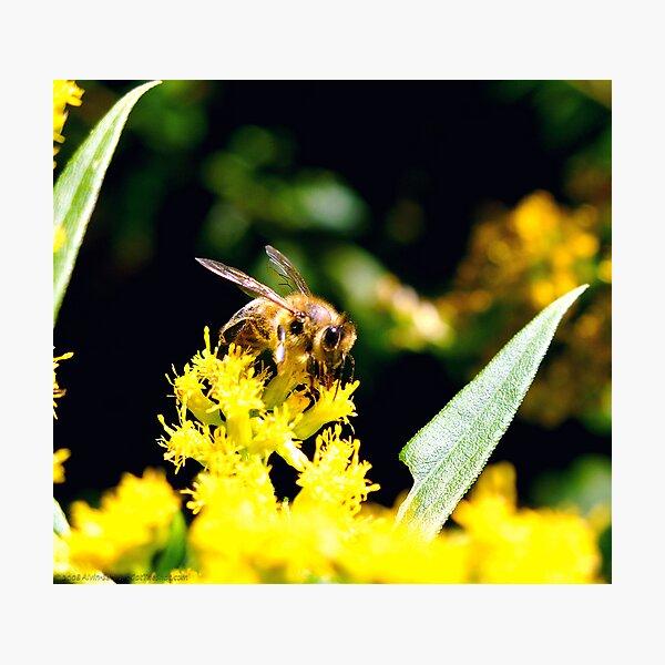~Pollinator~ Photographic Print