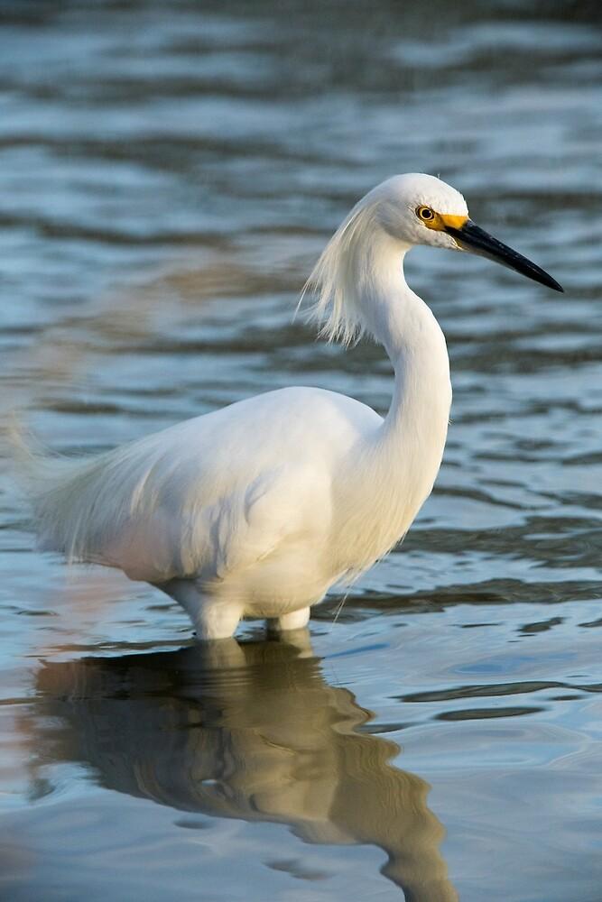 Snowy Egret 10.0 by gerardofm4
