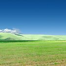 Green field panorama in a summer day by wildrain