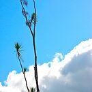 Tree in the Sky by Jen Waltmon