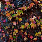 Dreaming of Leaves in Every Hue by Jen Waltmon