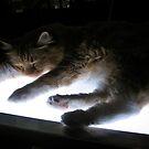 Asleep on the Lightbox by Jen Waltmon