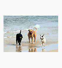 Three dogs at beach Photographic Print
