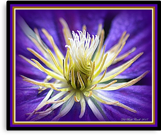Purple Clematis Vine Flower by Deb  Badt-Covell