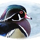 The Wood Duck by Malcolm Chant