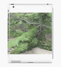 green pine tree iPad Case/Skin