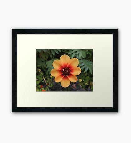 Sunshine In The Soil Framed Print