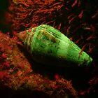 Marine mollusk fluorescence under UV light by Dan Monceaux