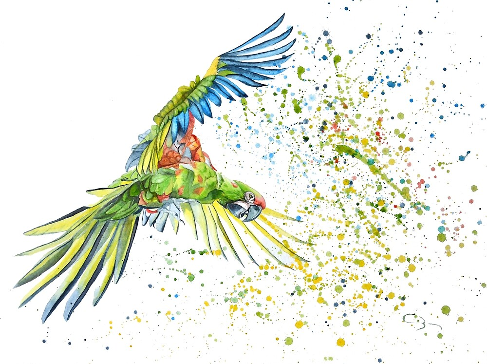 Watercolor of Parrot by cindybarillet