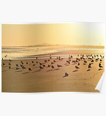 Seagulls on the shore Poster