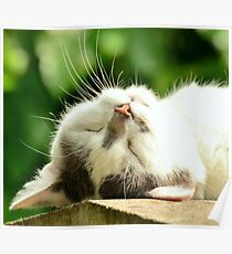 Adorable Sleeping Cat Poster