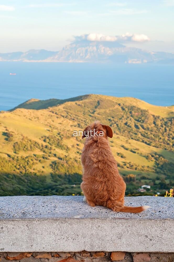 Lonely dog watching on Gibraltar strait by anytka
