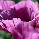 Purple Petals by John Dalkin