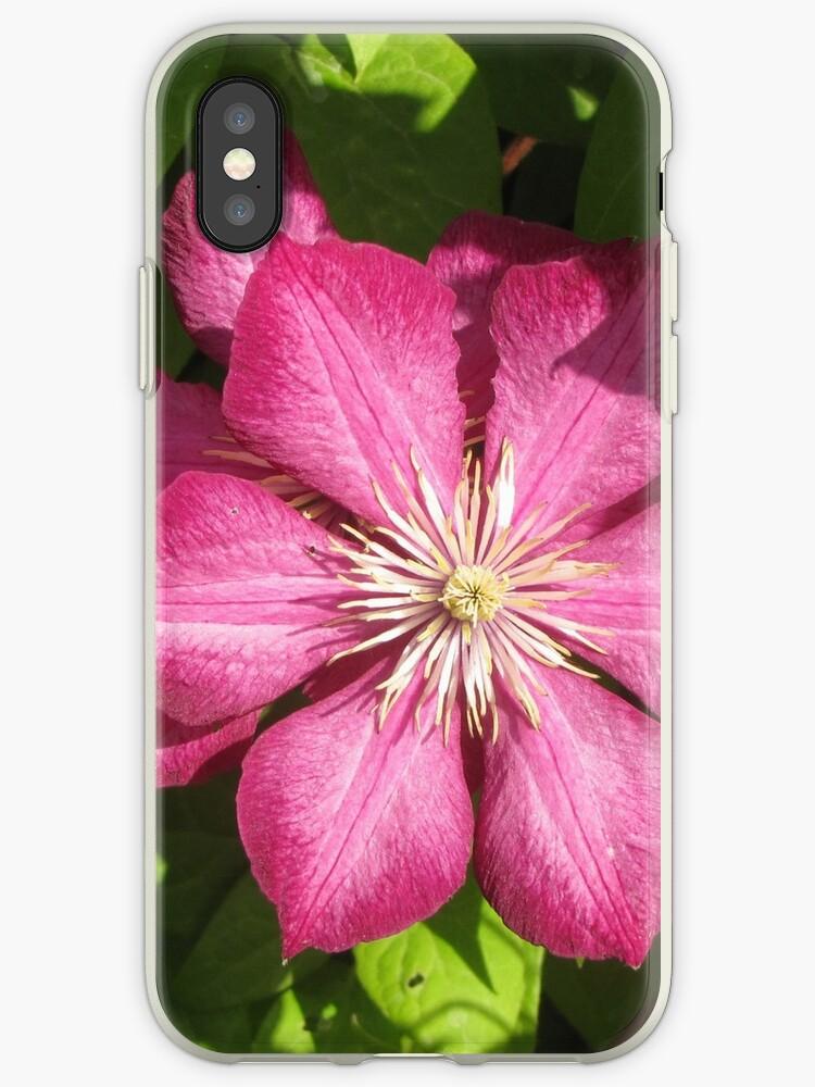clematis purple flower by designer437