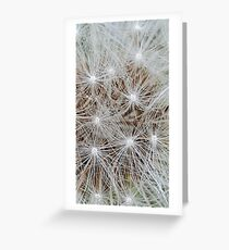 Consider the dandelion  Greeting Card