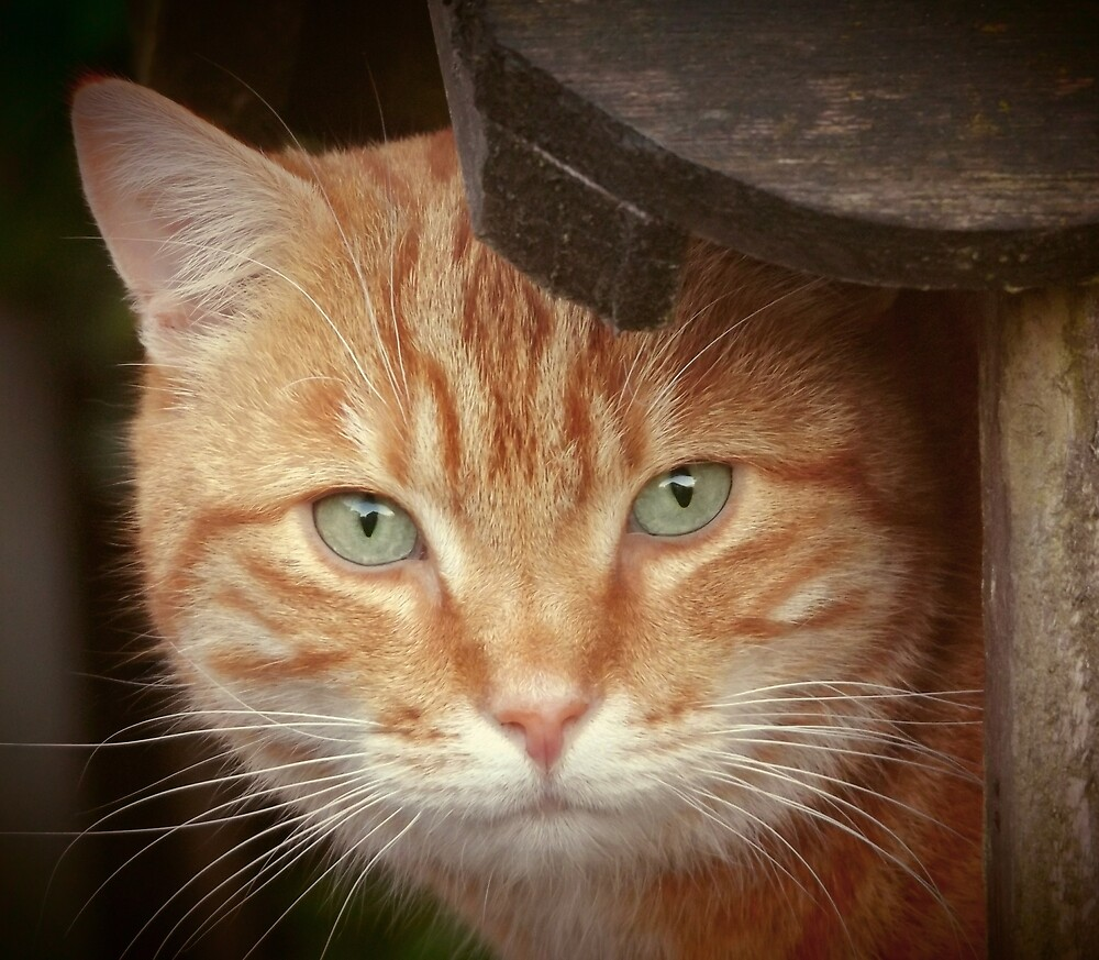 Adorable Ginger Tabby Cat Face - Orange Cat With Green Eyes  by superdazzle