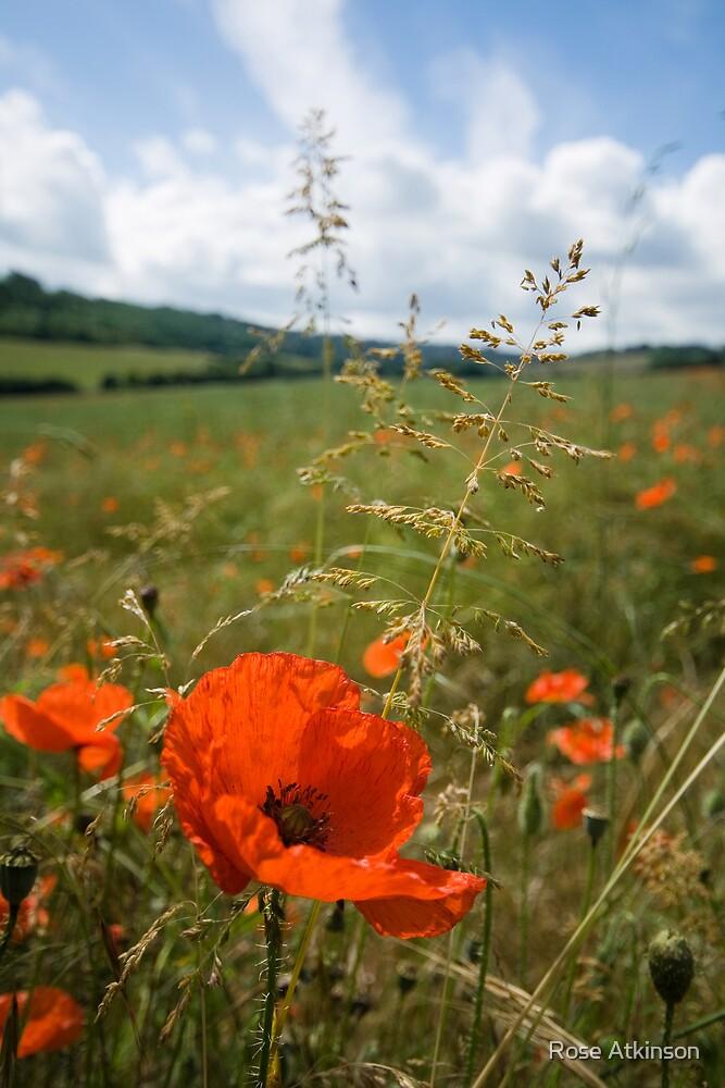 Summer poppy by Rose Atkinson