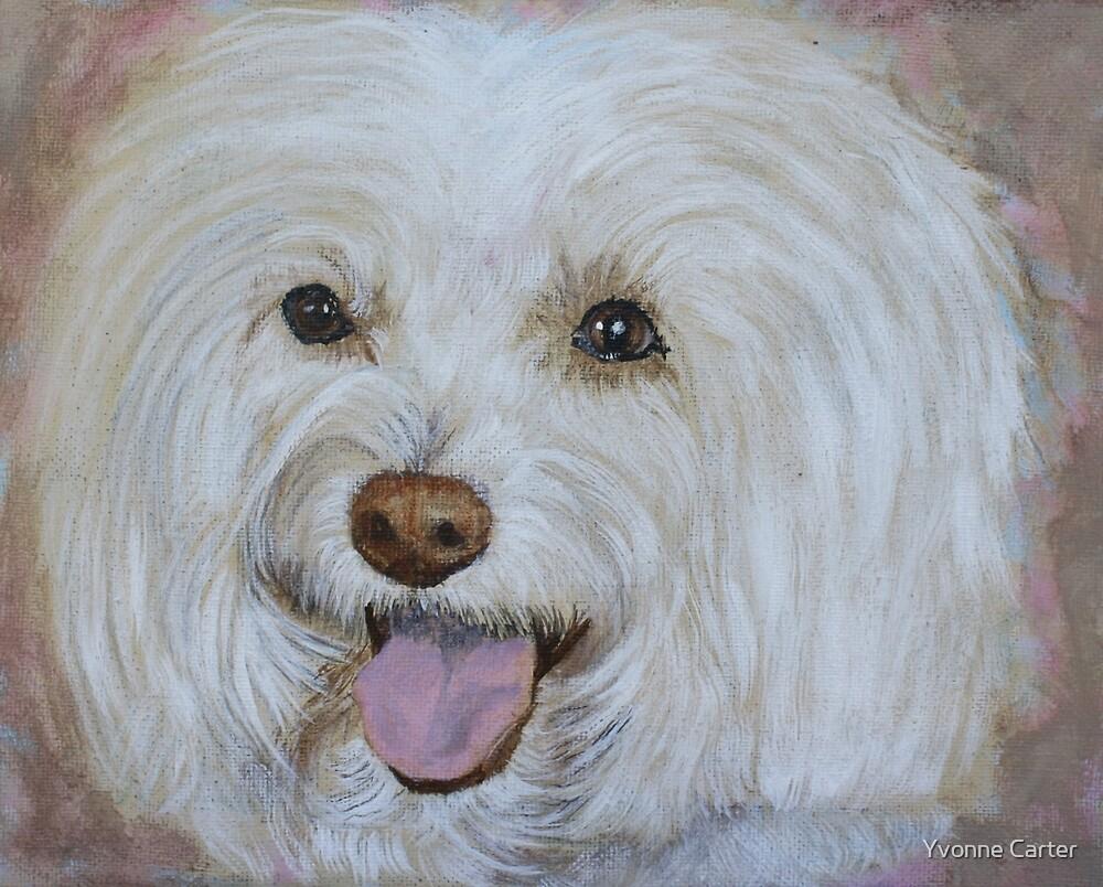 Bella the Maltese by Yvonne Carter