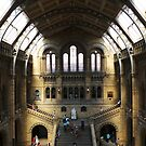 Natural History Museum, London by Paulychilds