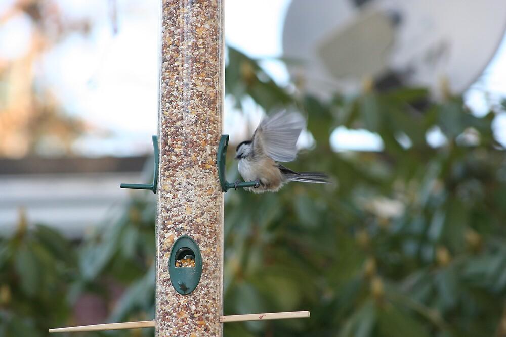 little bird in flight by turkeylegs