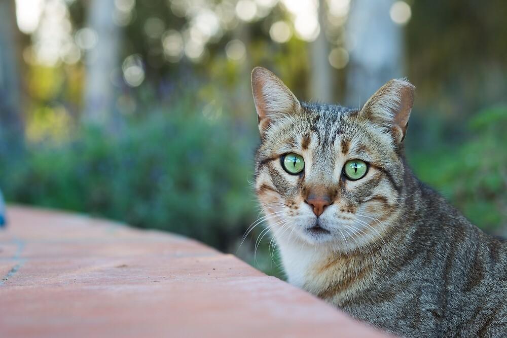 Cute cat portrait by Layuee