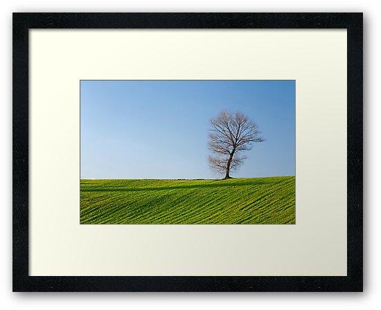 Tree, field and blue sky by Luigi Morbidelli