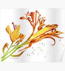 Schwindende Schönheiten Poster