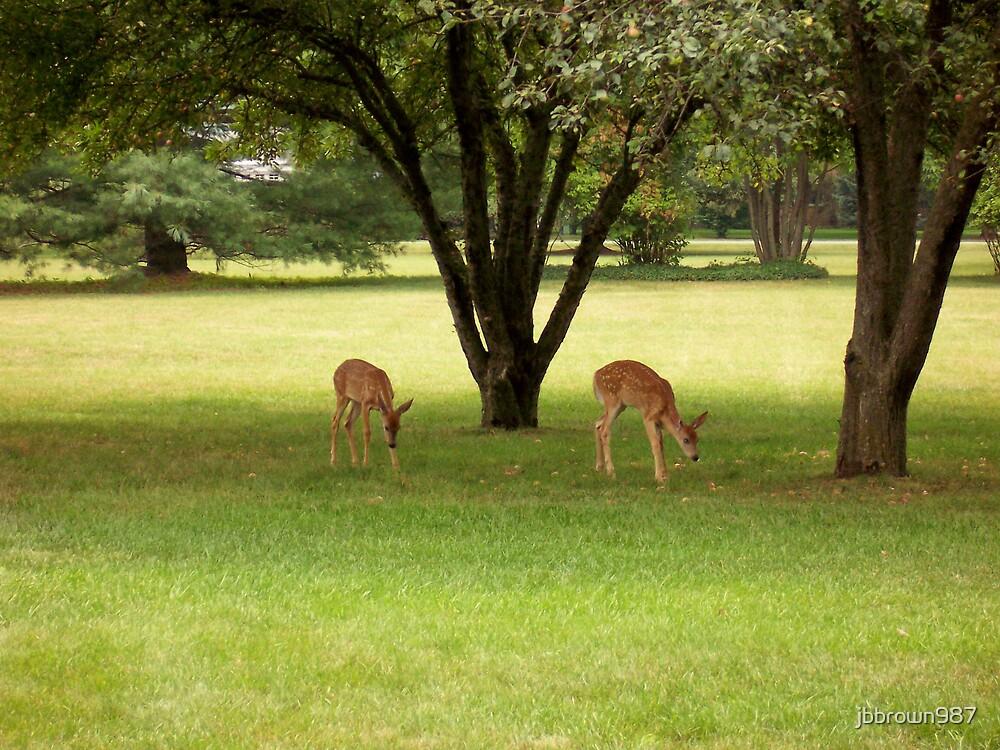 Deer On Afternoon Stroll by jbbrown987