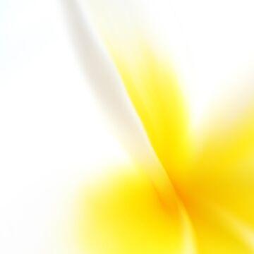 frangipani by ralph