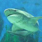 Shark by Ben de Putron