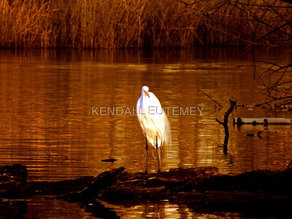 DO YOU WANT TO KNOW AN EGRET? by KENDALL EUTEMEY