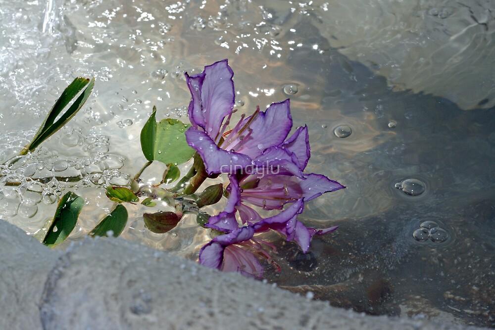 wet orchid by cindylu