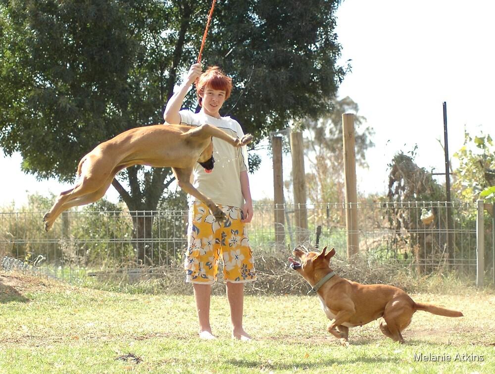 crazy dogs2 by Melanie Atkins