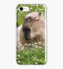 Snoozy capybara  iPhone Case/Skin